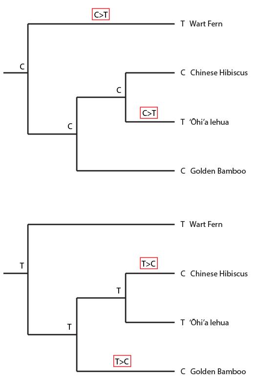 4plant-homoplasy2