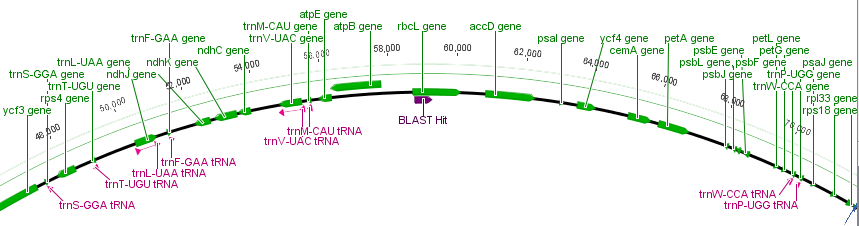 rpcL-genome-zoom