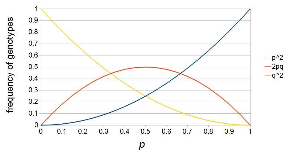 HW-curves